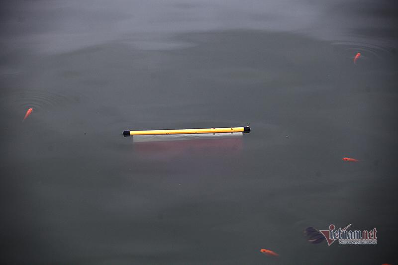 Cá chết, bơi cùng rác sau đêm phóng sinh