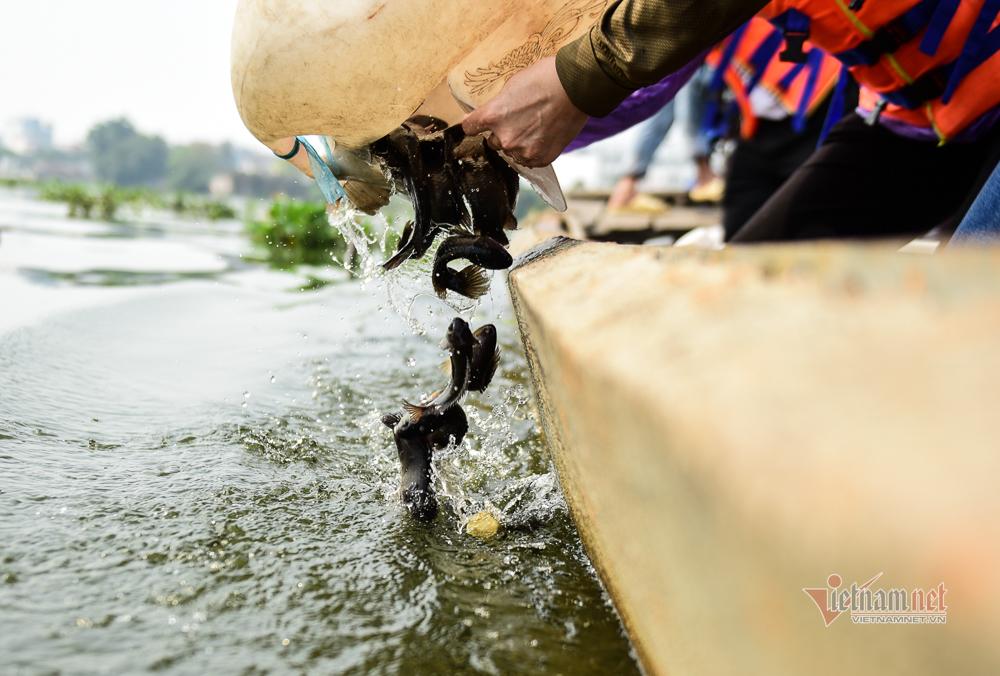 Né quân chích điện, thuê ghe ra giữa sông thả tạ cá ngày ông Công ông Táo