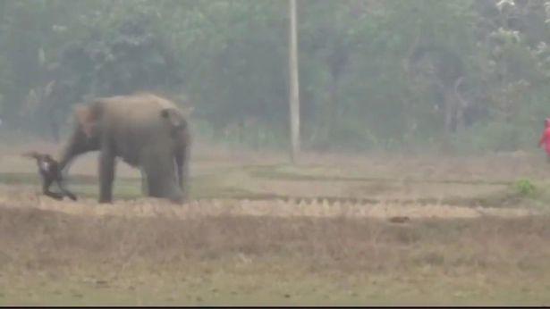 Du khách,Ấn Độ,voi rừng,ảnh tự sướng,voi rừng tấn công người