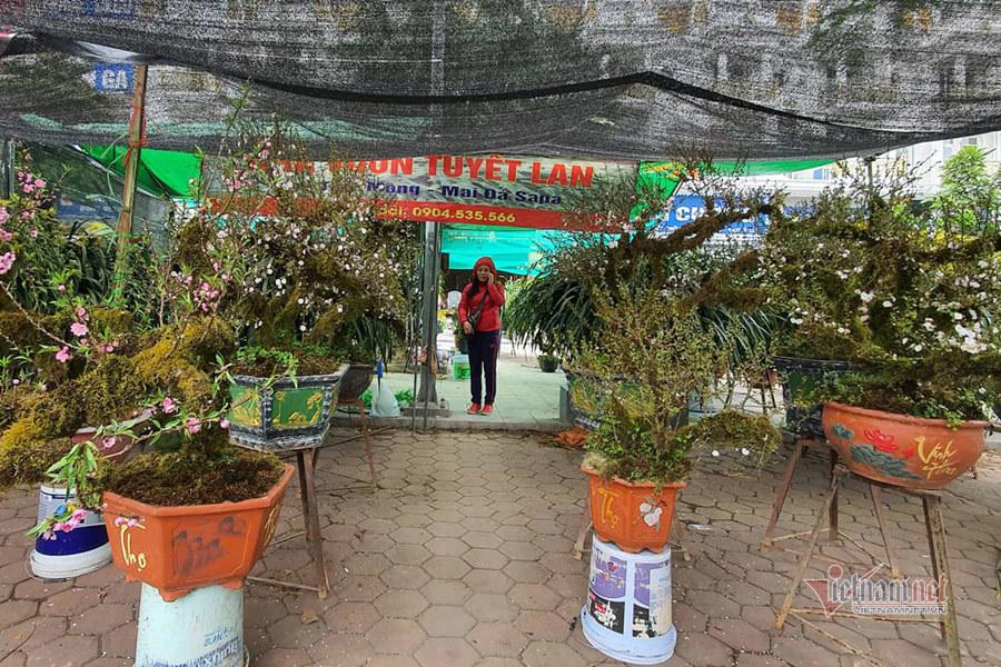 chợ Tết,cây cảnh chơi tết,Tết Nguyên Đán,Tết Canh Tý 2020