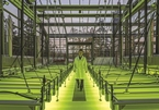 Microalgae can reduce pollution and be used as biofuel