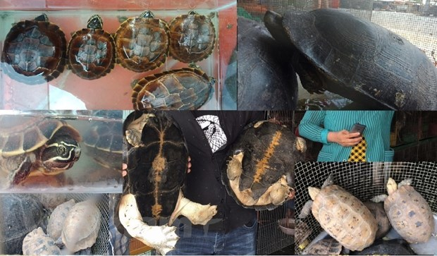 Red Book animals in danger, turtles threatened with extinction