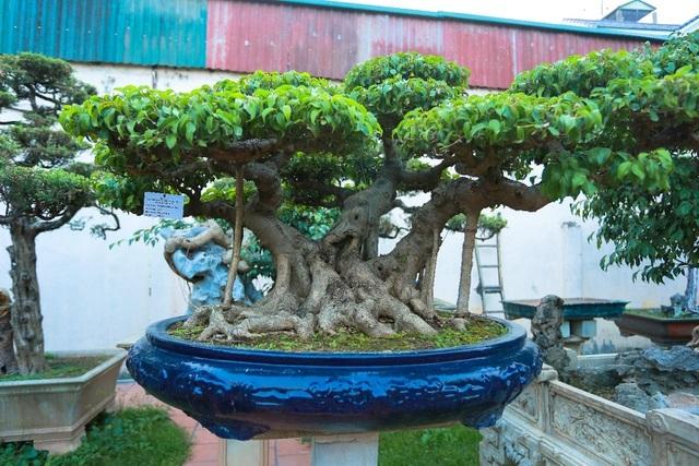 Choáng ngợp khu vườn bạc tỷ của đại gia chơi cây nức tiếng Hà Nội
