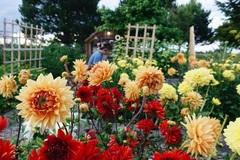 Rời thành phố chật chội, gia đình 5 người sống bên khu vườn tự cung, tự cấp