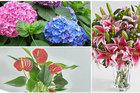 Thận trọng với những loài hoa đẹp chơi tết nhưng rất độc