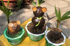 Giá tiền triệu, dừa bonsai hình chuột vẫn cháy hàng Tết Canh Tý
