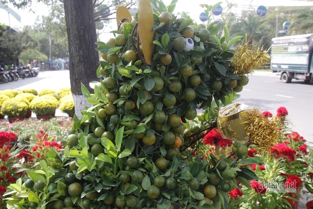 Quất tạo dáng 'Canh Tý' khuấy động chợ hoa Tết ở Quy Nhơn