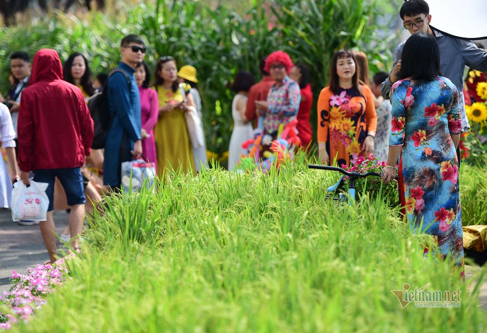 đường hoa,du khách,Tết Nguyên đán 2020
