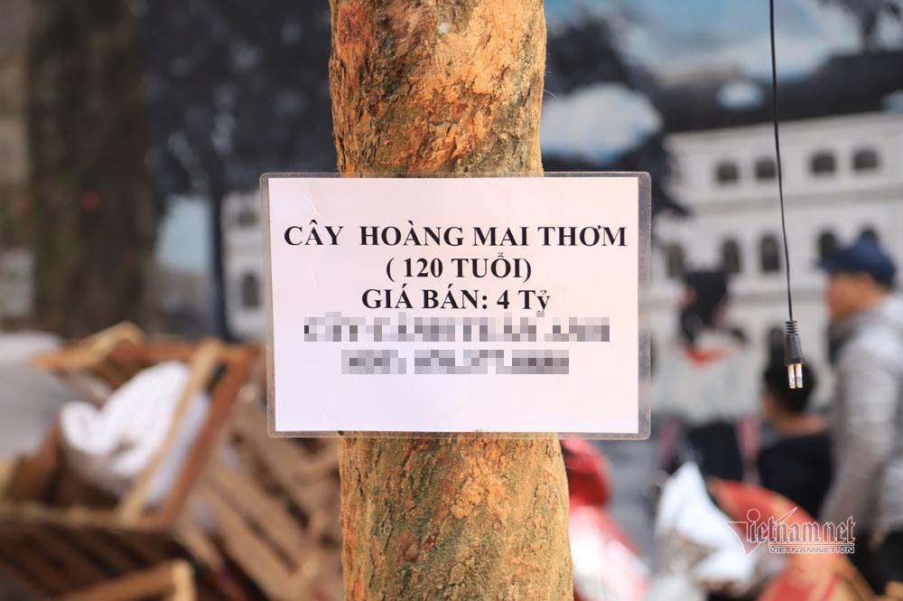 Xôn xao phố cổ Hà Nội, 'cụ' mai trơ trụi được ra giá bằng cả căn nhà