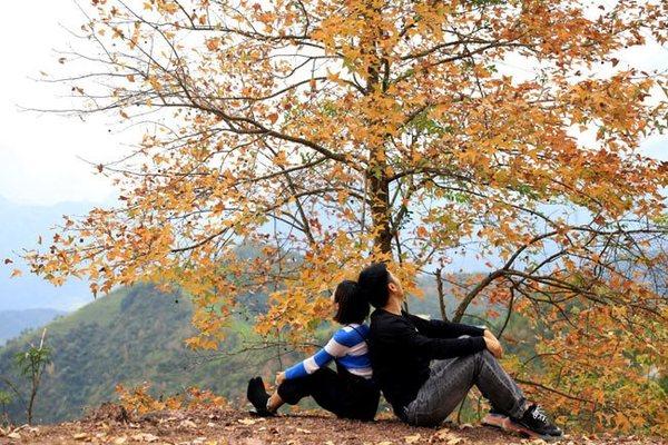 Maple forests in Vietnam