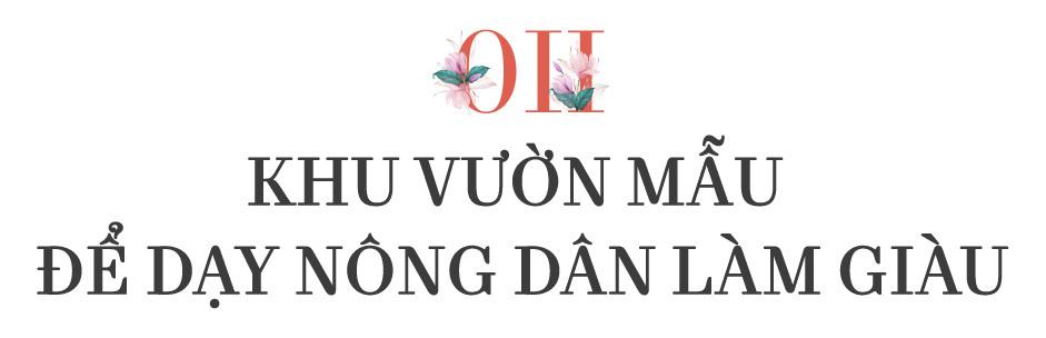 hoa lan,lan hồ điệp,cây cảnh chơi Tết,Tết Nguyên đán,tết canh tý 2020