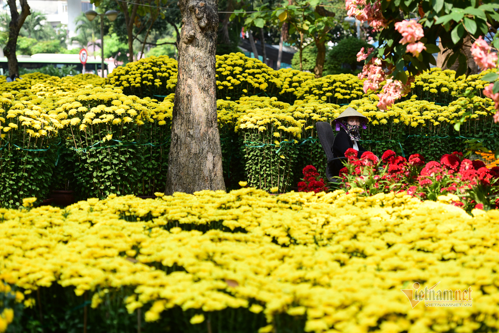 Công viên 23 tháng 9,chợ hoa,chụp ảnh,xuân canh tý 2020,Tết Nguyên đán 2020