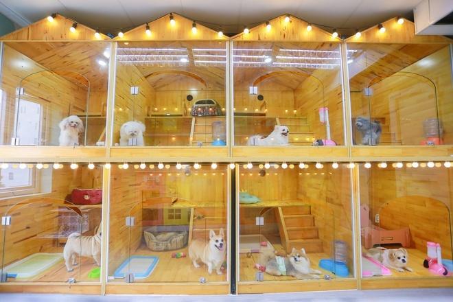 Chi tiền triệu gửi chó, mèo đi nghỉ khách sạn dịp Tết