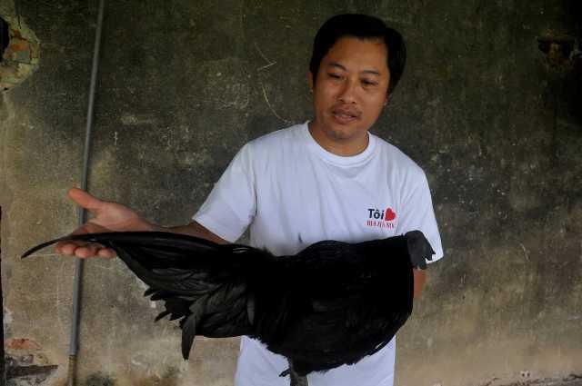 Chân không chì, loài gà đen sì này lạ và hiếm, chưa Tết đã hết gà