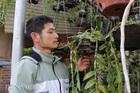 Lạ mà hay: Cho lan rừng 'uống' nước luộc đu đủ thu hàng trăm triệu