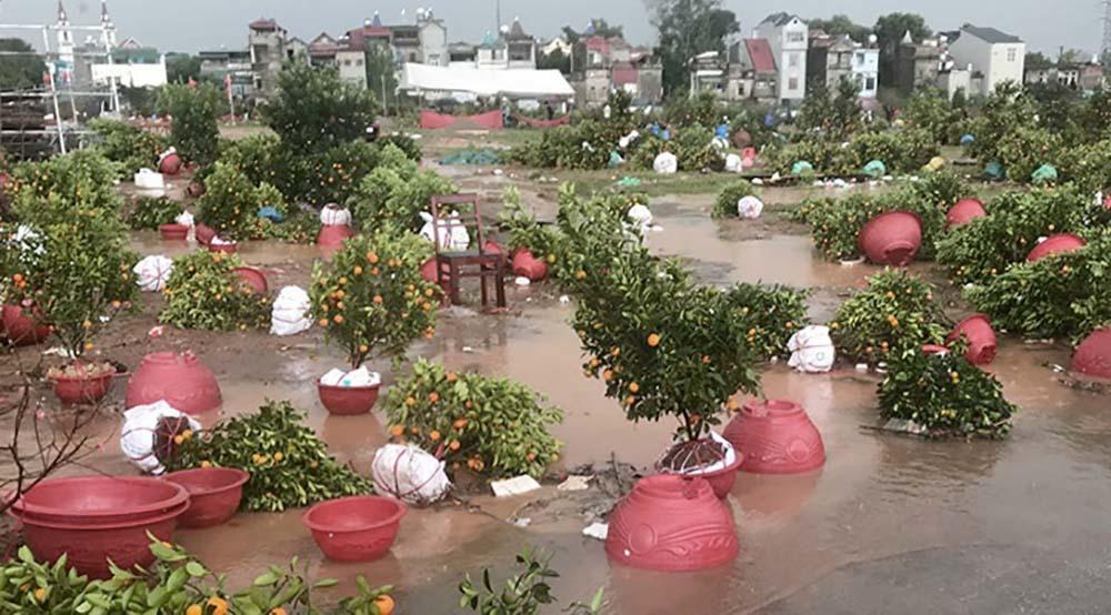 Quất cảnh tan tác, phố ngập thành sông sau cơn mưa đá chiều 30 Tết