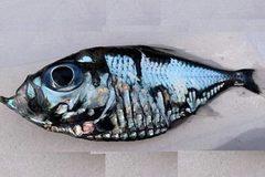 'Cá Picasso' gây sốt vì giống hệt tác phẩm hội họa