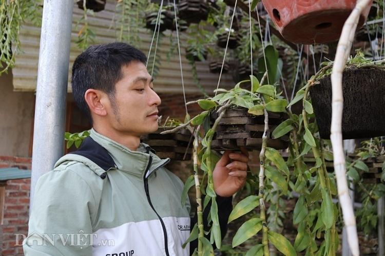 Hàng độc: Lan rừng 'uống' nước luộc đu đủ, tiêu 'ăn' trứng vịt