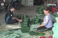 Vinh Hoa villagers awake all day for making chung cakes