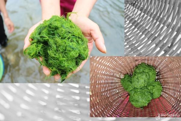 Lặn đáy sông vớt rêu có ngay món mọc ngon ngày Tết