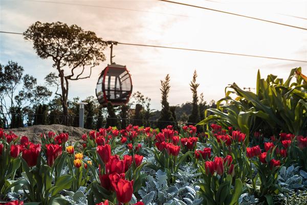 Xuân này, bạn đã kịp 'check-in' thiên đường hoa đẹp mê hồn ở Bà Nà?