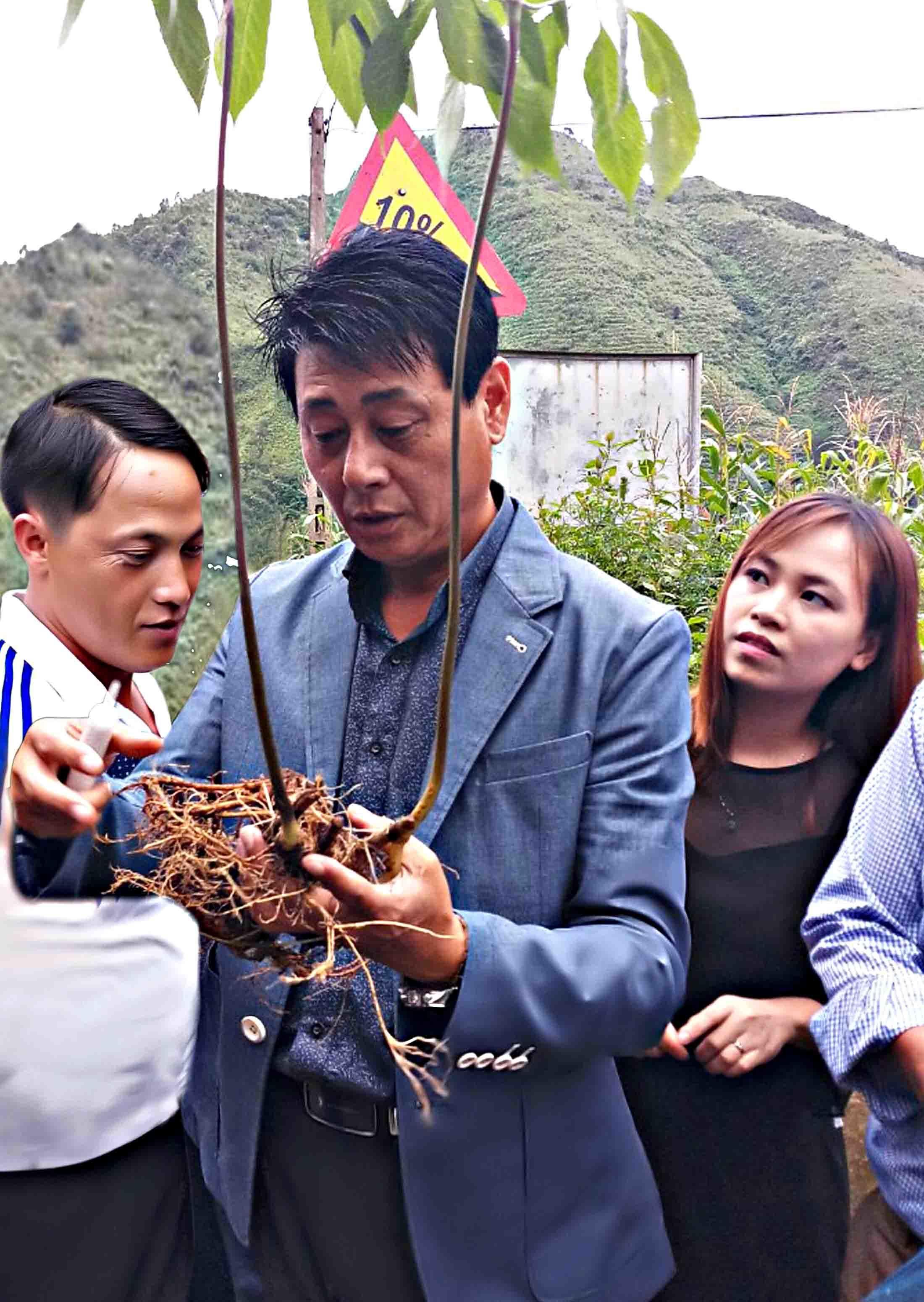 Loài sâm quý ở Lai Châu, vô tình thấy 1 củ bán 450 triệu đồng