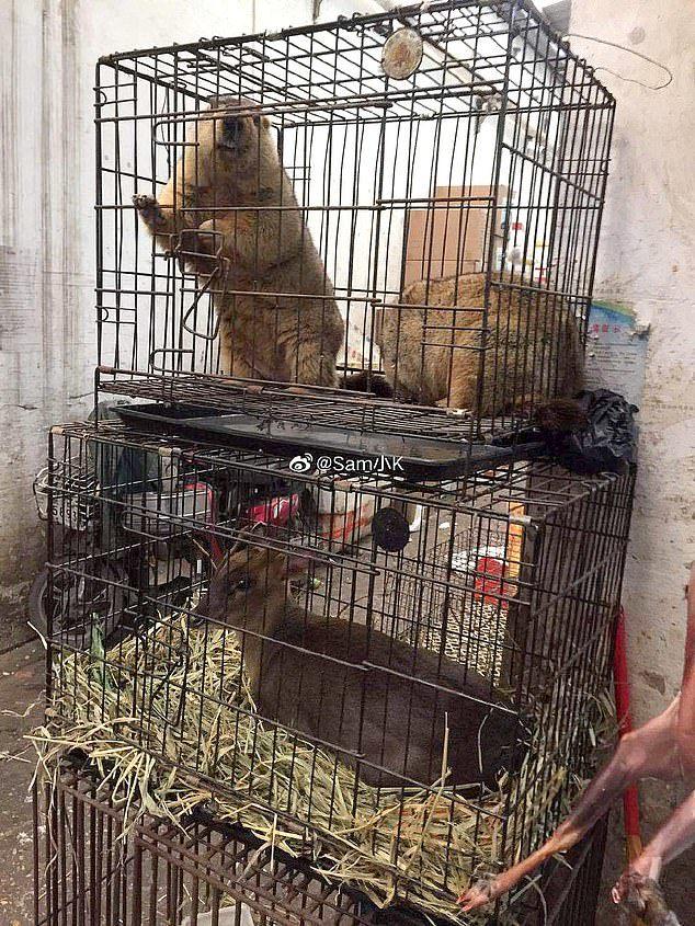 Có gì bên trong chợ hải sản Hoa Nam, nơi bùng phát virus corona
