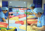 Vietnam needs more input materials to export more cashew nuts
