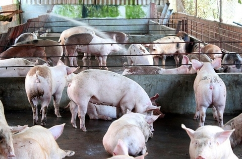 Domestic companies sign deals in livestock industry