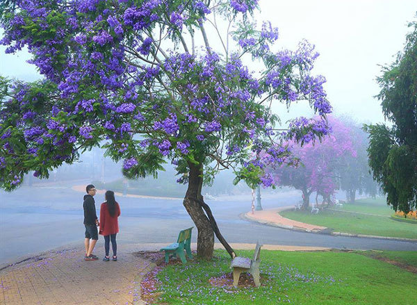 Searching for flowers in Central Highlands city