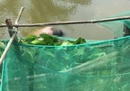 Bạc Liêu thông tin vụ thi thể 2 cha con người Trung Quốc nổi dưới sông