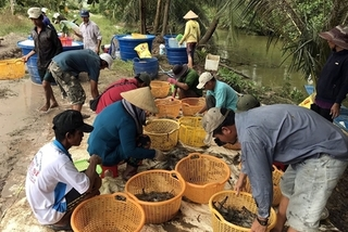 Mekong Delta aims for sustainable shrimp production at high profits