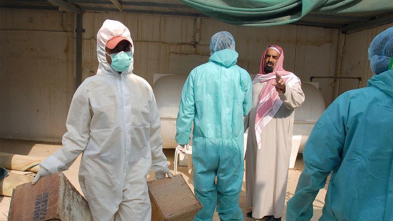 Ổ dịch cúm H5N8 bùng phát ở Ảrập Xêút, gia cầm chết 'như ngả rạ'
