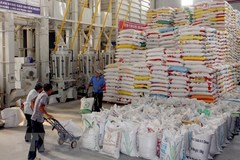 Vietnam's rice exports to Philippines in 2019 surge