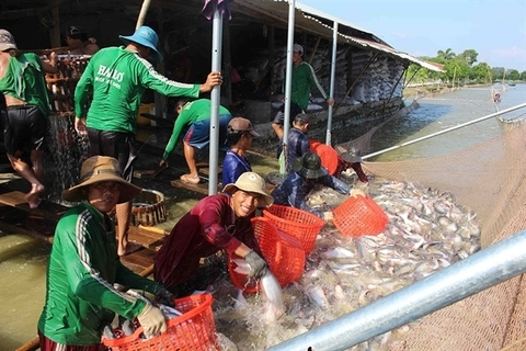 Vietnam catfish exports likely to recover this year