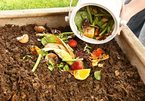 Students use waste microorganisms to turn garbage into profit