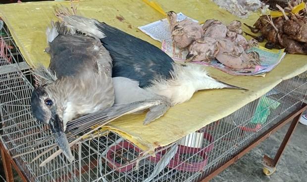 Kiểm soát chặt hoạt động nhập khẩu động vật hoang dã