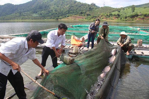 Nuôi loài cá sắp tuyệt chủng, quý hiếm trên sông Sêrêpốk