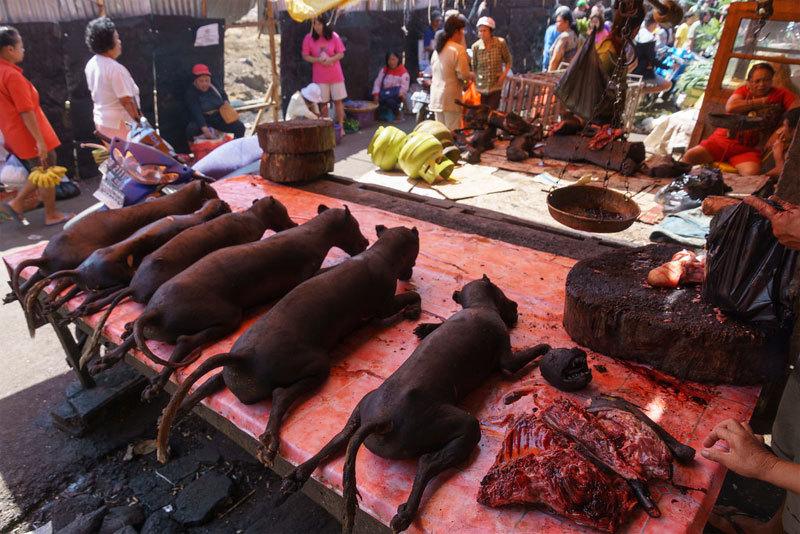 Hình ảnh thịt dơi bán nhan nhản ở chợ Indonesia giữa thời dịch corona