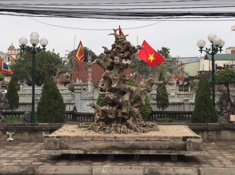 Khúc củi khô 4 tỷ của đại gia đồng nát Hà Nội