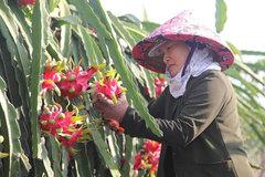 Trung Quốc vẫn 'đóng cửa', Bộ Công Thương ra khuyến cáo