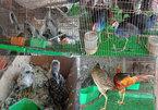 Vietnam to keep close eye on wildlife import, sale