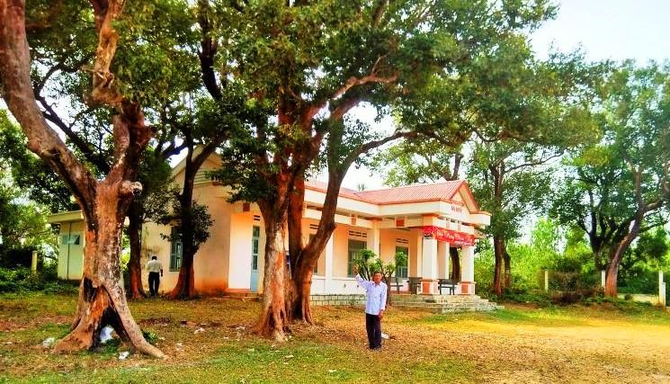 Lạ ở Bình Định: Làng ra 'nghị quyết' bảo vệ báu vật là 20 cây kơnia