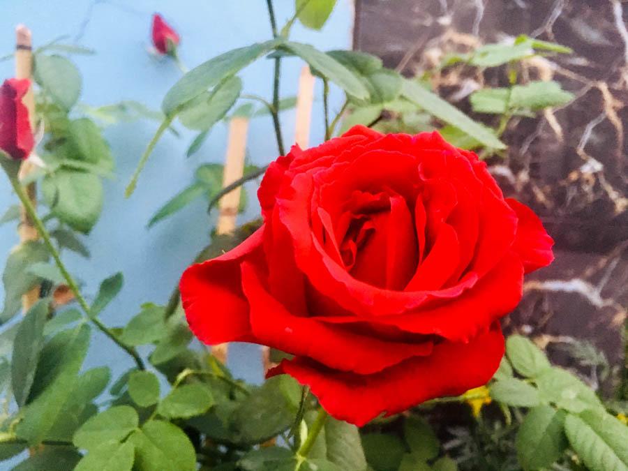Những lời chúc lãng mạn cho vợ chồng ngày Valentine