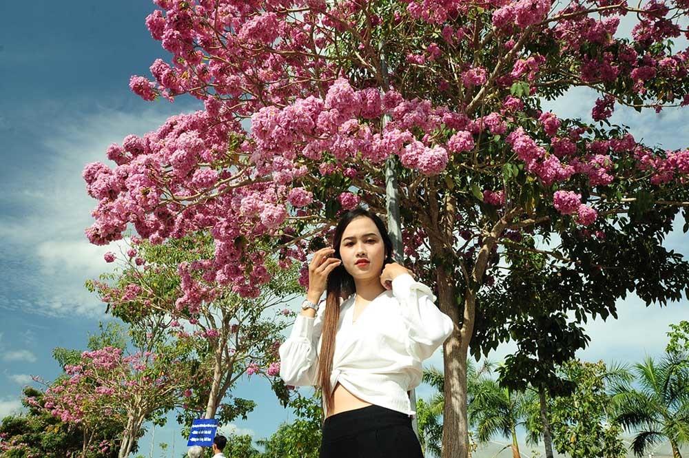 Con đường 160 cây hoa kèn hồng nở rực rỡ ở miền Tây