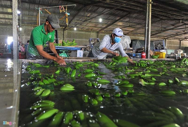xuất khẩu nông sản,xuất khẩu nông sản chính ngạch,virus corona,thị trường trung quốc