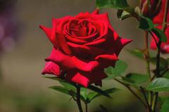 Gợi ý lời chúc ngọt ngào dành tặng bạn gái ngày Valentine