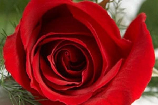 Những lời chúc ấm áp dành cho chồng ngày Valentine