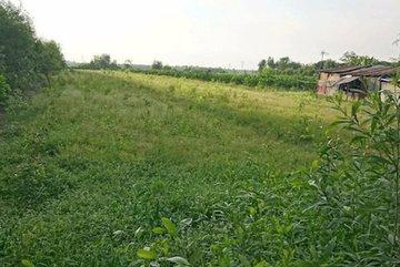 HCMC seeks to convert 384 hectares of farmland into urban land