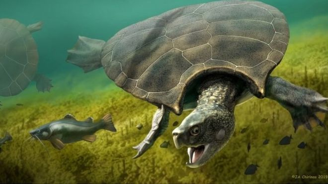 Car-sized turtle fossils unearthed